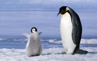 pinguino-con-pulcino